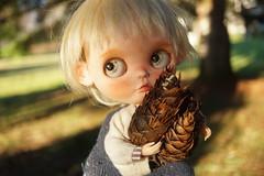 DSC09106 (Lindy Dolldreams) Tags: blythedoll noraooakcustomblythe boy doll pinecone