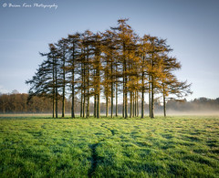 A Beautiful Morning (.Brian Kerr Photography.) Tags: scotland scottishlandscapes scottish scotspirit scottishborders scottishlandscape sonyuk autumn weather morning mistymorning a7rii availablelight atmosphere mood outdoor outdoorphotography opoty visitscotland visitbritain vanguarduk formatthitech firecrest nature naturallandscape natural photography landscapephotography landscape dumfriesandgalloway dgwgo lockerbie trees sunrise light briankerrphotography briankerrphoto photo grass sky tree field forest