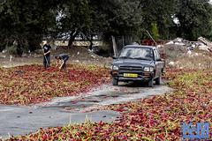 Israel: Street Scenes (anat kroon) Tags: middleeast streetphotography urban documentaire documentary wwwkroonenvanmaanennl anatkroon kroonenvanmaanenfotografie