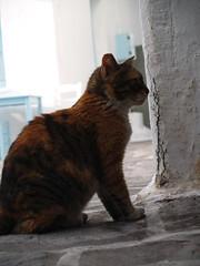 Lucy (Kostantina Skoulaxinou) Tags: paros greece naousa cat easter vacation