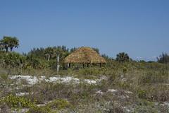 DSC_3040 (ucumari photography) Tags: ucumariphotography sanibelisland fl florida island march 2018