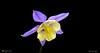 I COLORI DELLA NATURA (Salvatore Lo Faro) Tags: natura nature fiore colori giallo violetto salvatore lofaro nikon d 300