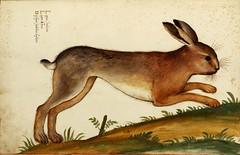 Animal-Woodland-Rabbit-Italian-4 (DLMajor) Tags: animal rabbit italian art folkart medieval illustration painting color european easter woodland