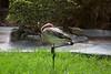 Flamingo (Carlos Santos - Alapraia) Tags: flamingo ngc ourplanet animalplanet canon nature natureza wonderfulworld highqualityanimals unlimitedphotos fantasticnature birdwatcher ave bird pássaro