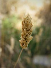 Frias de Albarracin (SuaneG) Tags: teruel frias