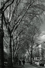 promenade trees@KÖ, Düsseldorf (Amselchen) Tags: platanus sidewalk street streetphotography people kö germany mono monochrome blackandwhite bnw sony a7rii alpha7rm2 sonyilce7rm2 zeiss carlzeiss planar planar1450 planar1450tzs planar5014zs m42