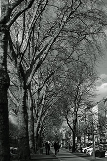 promenade trees@KÖ, Düsseldorf