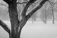 The Sound of Silence ... (vanessa violet) Tags: winter snowfall snow flurries snowflakes park pathways walk trees thesoundofsilence simongarfunkel silence paulsimon
