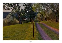 Countryside Spring (Max Angelsburger) Tags: contryside green bloom apple apfelbaum tree grass spring romantic warm hill hügel weg dreamy landluft landleben april 2018 gaisberg goathill niefern öschelbronn enzkreis badenwuerttemberg germany europe earth