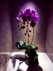 The Potted Plant (Steve Taylor (Photography)) Tags: orchid pot alcove art digital green mauve purple white asia city singapore flower leaves glow spotlight