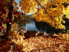 End of the bike trail (edenseekr) Tags: golden maple trees autumnfoliage ponderosa wenatchee river leavenworth washingtonstate