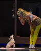 """""""Bruiser"""" reports on Elle, 2 (R.A. Killmer) Tags: legally blonde bruiser dog actor stage chihuahua bethelpark musical"""