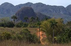 Chroniques cubaines 15 (chriskatsie) Tags: cuba linda mogotes montagne palmier palm tree palmtree landscape forest sky