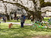 DSCN5588 (amgirl) Tags: march21 thequad seattle uw trees cherryblossom 2018 spring