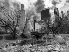 Central Park (Will.Mak) Tags: centralpark newyorkcity newyork nyc nyclife landscape city mono monochrome blackandwhite bw olympusem1markii olympusm1240mmf28 olympus em1markii m1240mm f28