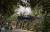Afternoon Garratt (Dobpics O'Brien) Tags: locomotive gauge garratt g42 monbulk creek train trestle billy bridge belgrave pbr puffingbilly puffing pbps pass rail railway railways engine steam victorian victoria vr narrow