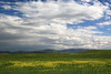Spring in California (Jolita Kievišienė) Tags: california spring bay area hills grass flowers wild grassland field meadow america nature landscape clouds sky cloudy