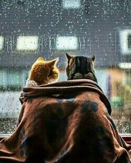 #love #romance #weather #cute #adorable #cats #kitties #pets #animals #blanket (mcdomainer) Tags: animals love romance cute cats kitties pets weather adorable blanket