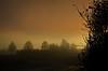 Winter is almost gone... (Tobi_2008) Tags: winter landschaft landscape bäume trees himmel sky hessen deutschland germany allemagne germania
