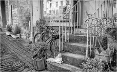 Barnard Castle . (wayman2011) Tags: fujifilm23mmf2 lightroomfujifilmxprp1 wayman2011 bw mono rural markettowns town shops bikes pennines dales teesdale barnardcastle countydurham uk