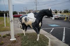 DSC_7468 (Copy) (pandjt) Tags: roadtrip unitedstates usa northcarolina wingedhorseextravaganza horse horsesculpture sculpture statue fiberglasssculpture publicart killdevilnc killdevil