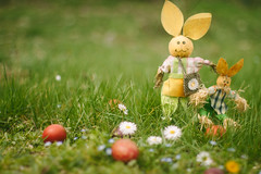 Happy Easter (Inka56) Tags: easter meadow rabbit egg eggs grass daisies flowers 7dwf fauna