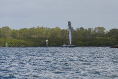 LOX_3742 (Lox Pix) Tags: australia queensland brisbanetogladstone yachtrace catamaran trimaran 2018 bossracing multihull loxpix moretonbay shorncliffe cabbagetreecreek rudder aground sailing