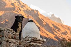 Mountain Dogs