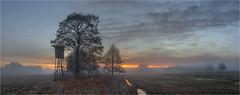 Reischenauer Ansicht (Robbi Metz) Tags: deutschland germany bayern bavaria reischenau augsburgwestlichewälder landscape panorama trees forest fog sunrise colors canoneos
