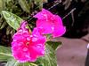 لا يمكن للورود أن تحُل جميع المشاكل ، ولكنها بداية جيدة (suhaalnaqeeb54) Tags: ورده زهره زهور تصويري تصويرسهى سهى