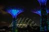 untitled-13 (SnailsPlace) Tags: snailsplacesingapore2018 snailsplace singapore fujifilm fujifilmxt2 xt2 mitakon mitakon35mmf095 gardensbythebay supertrees gardensbythebaysupertrees nightphotography lowlight