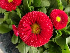 Blüte (fifi_mcgee) Tags: blüte blume blumen makro makroaufnahme frühling nahaufnahme blossom flower closeup spring nature natur