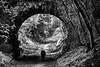 Out in front (Chris Johnston Photography) Tags: forest bridge magical forgotten pentax k1 samyang samyang135mm f2 pentaxart