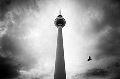 Featuring - Berlin (Roubaka) Tags: berlin fernsehturm bird