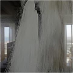 ras al khaimah 69 (beauty of all things) Tags: vae uae rasalkhaimah hotel interiors foto photograph animals horses tiere pferde