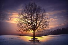 around a tree (Chrisnaton) Tags: tree winter wintertree landscape snow eveningsky eveningmood sunset silence bench bencharoundatree