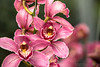 20180317-IMG_3663 (SGEOS AT EARTH) Tags: orchideeënhoeve luttelgeest butterfly vlinders orchideeën orchid hoeve nature wildlife flowers
