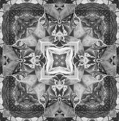 Pattern 03 (Only photoshoot, don't be afraid) Tags: bloemen macroopname pattern macro patroon dessin muster