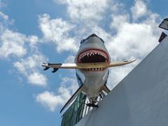 Shark Attack (Eskling) Tags: corralejo shark surf board surfing jaws teeth