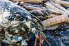 IMG_0361 (Adrian Royle) Tags: lincolnshire skegness gibraltarpointnnr nature wildlife marine beach shellfish crabs urchin lobster starfish nikon macro