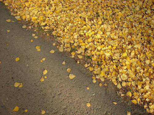 Асфальт и листья ©  ayampolsky