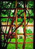 the arbour with a view - the KITCHEN ROOM (ellynwriting - slowmode) Tags: garden imagination insideme arbour wisteria deck japanesemaple stonebench fence herbs