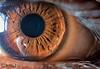 Listen with your eyes for feelings... (sabbirahamed225) Tags: humaneye eye iris macrodream