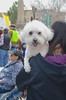March For Our Lives - Santa Fe (suenosdeuomi) Tags: gunviolence newmexico marchforourlives santafe marchforourlivessantafe suenosdeuomi imagechérie cute dog doglover march4ourlives protest