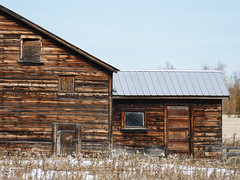 A favourite old barn (annkelliott) Tags: alberta canada nofcalgary building old barn barnorhomestead wooden weathered goodcondition architecture rural ruralscene field grass snow outdoor autumn fall 4october2017 fz1000 annkelliott anneelliott ©anneelliott2017 ©allrightsreserved