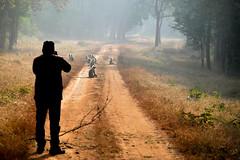 Betla National Park (pallab seth) Tags: nature wild forest nationalpark betla palamou jharkhand india animal jeepsafari morning