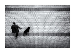 Chien et maitre ! (bertranddorel) Tags: animal chien people personne homme man humain human maitre noiretblanc bnw bw nb wb blackandwhite dinard bretagne france europe contrast ngc urban city ville street sreetphoto rue lignes graphique graphisme dog blancoynegro biancoenero white walking nikon nikkor world
