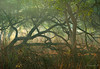 Untitled (Mayank Bhatnagar) Tags: bharatpur forest forestbeauty woods trees grasses nationalpark india rajasthan keoladeoghana keoladeo morning mist misty foliage fallentree morninglight forestscape birdsanctuary nature