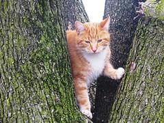 IMG_5309 (kennethkonica) Tags: cat animalplanet animal animaleyes canonpowershot canon indianapolis indiana indy usa hoosier midwest pet america random outdoor
