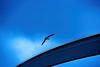 Overflying...  ♪♫ (Fnikos) Tags: port porto puerto harbour bird seagull sky cloud fly flight outdoor